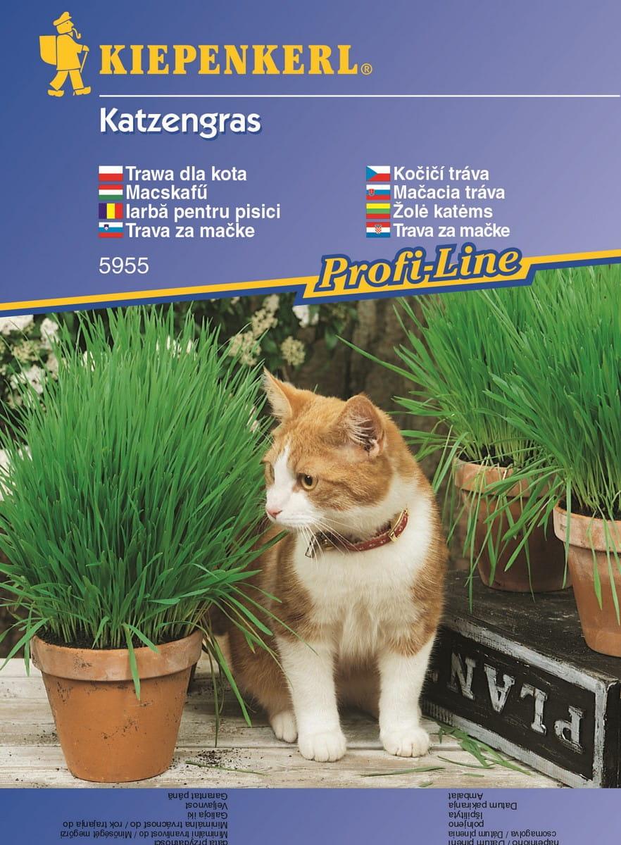 Trawa dla kota | Kiepenkerl