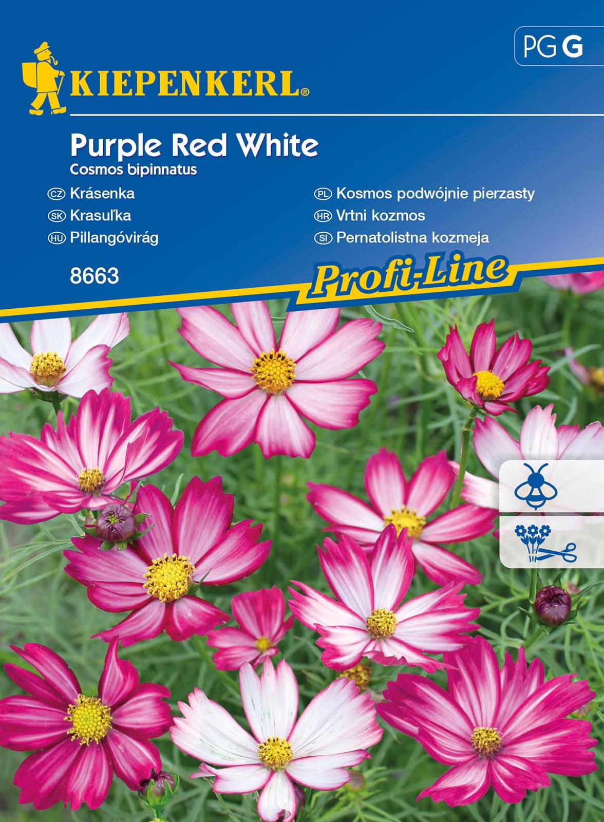 Kosmos podwójnie pierzasty 'Purple Red White'