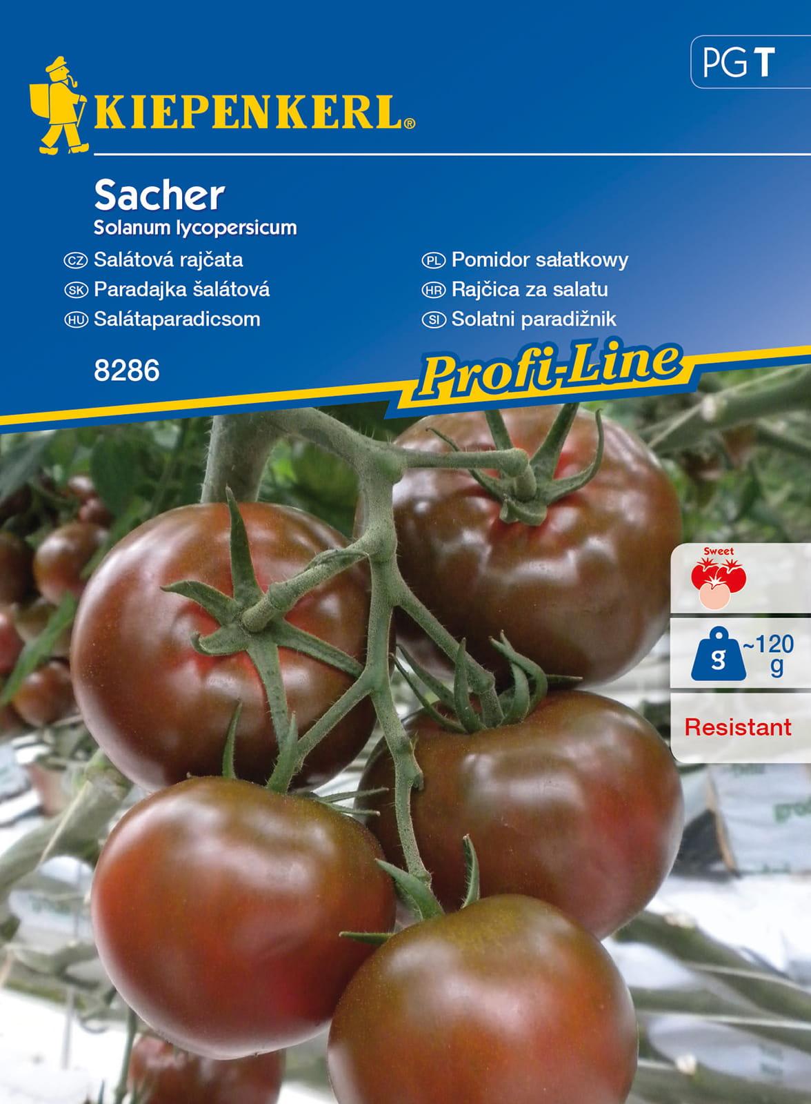 Pomidor sałatkowy 'Sacher'
